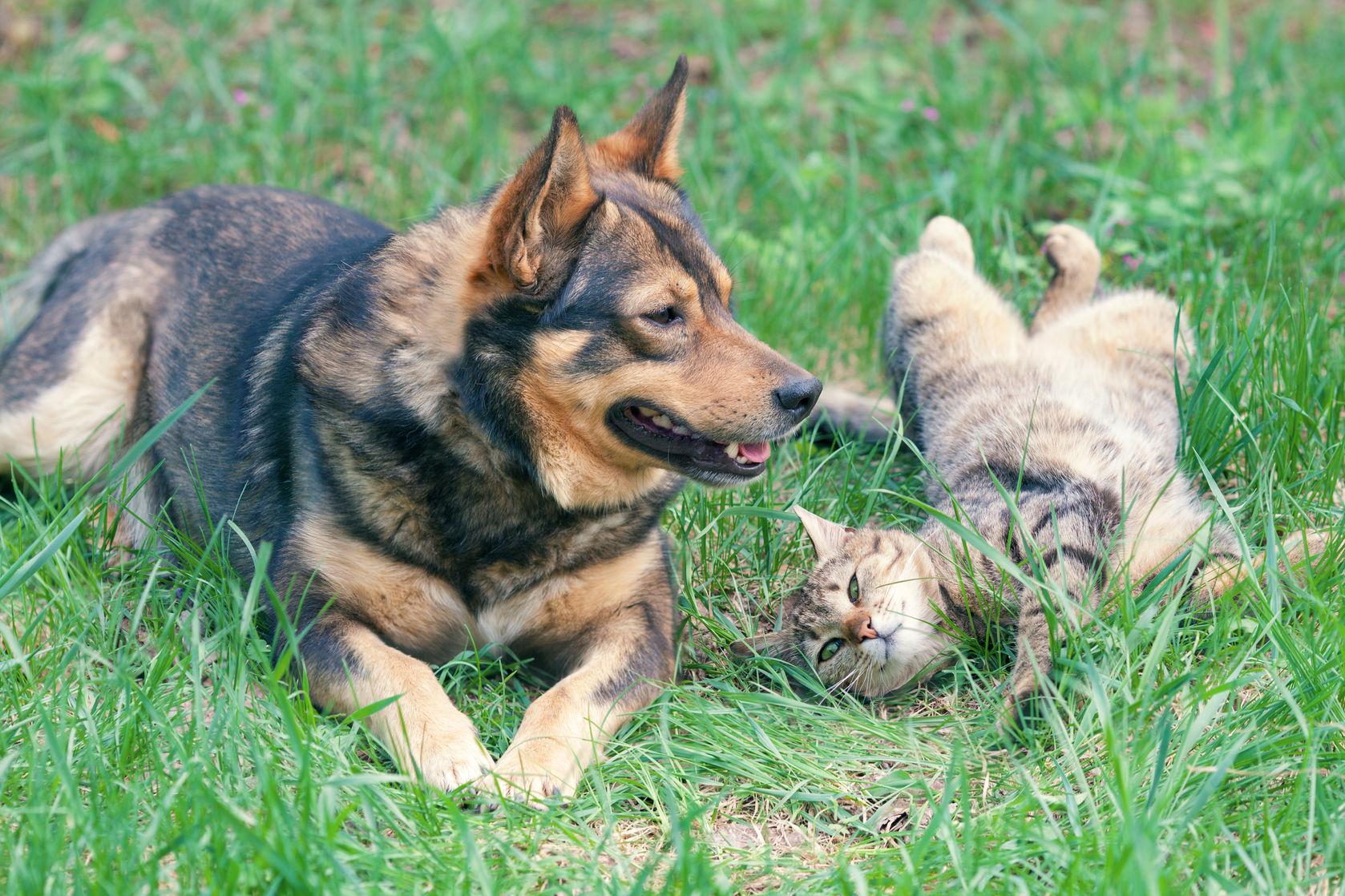 perro y gato jugando juntos gato al aire libre tumbado sobre la espalda
